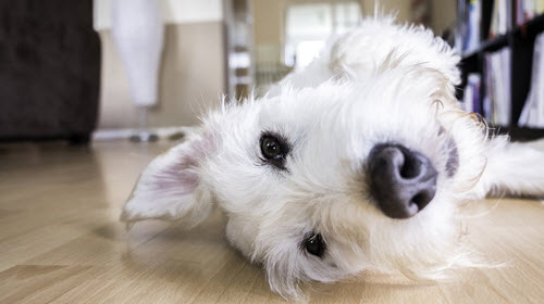 Tips For Dog Proofing Your Home